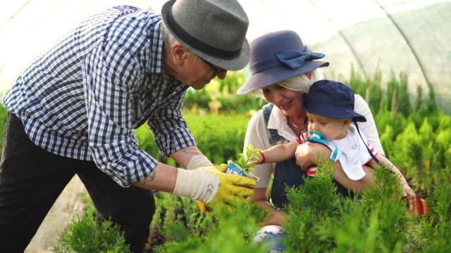 senior workers at plant nursery garden examine plants - gardening stock videos & royalty-free footage