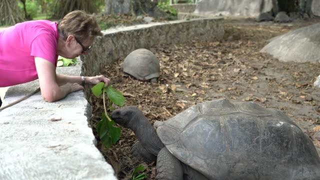 stockvideo's en b-roll-footage met seniors taking on the world, woman feeding giant turtle - bukken