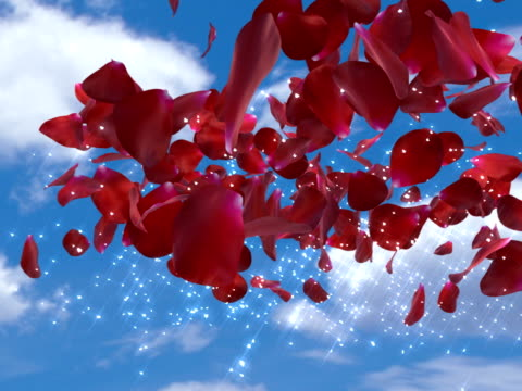 sensational love message ! - rose petal stock videos & royalty-free footage
