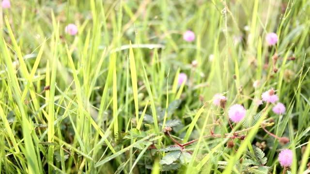 vídeos de stock, filmes e b-roll de planta é sensível flor desabrochando e abelha à procura de melão da manhã. - melão musk
