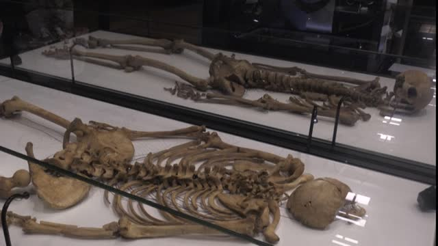 separated for 1,000 years, two viking warriors from the same family are reunited at denmark's national museum, as dna analysis helps shed light on... - history stock videos & royalty-free footage