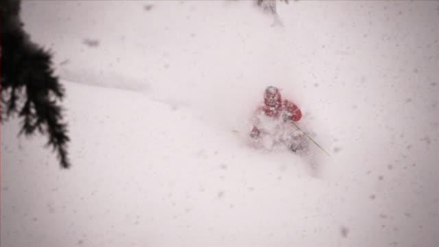 September 16 2009 SLO MO An extreme downhill free skier taking a treelined trail through fresh powder / Minnesota United States