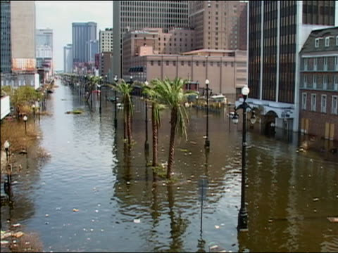 vídeos de stock, filmes e b-roll de september 4 2005 long shot palm trees submerged in standing water after hurricane katrina / new orleans louisiana - 2005
