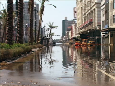 vidéos et rushes de september 4, 2005 wide shot zoom out flooded street lined with palm trees after hurricane katrina / new orleans, louisiana - endommagé