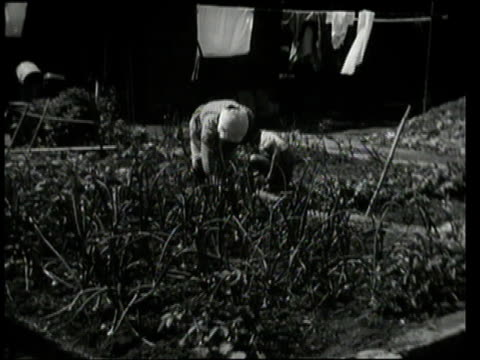 september 9, 1948 montage women weeding small plot in front of house / tokyo, japan - 1940~1949年点の映像素材/bロール