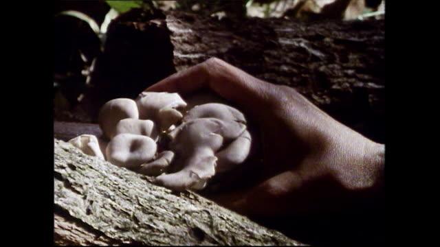 seq. foraging and cooking shimeji mushrooms in japan; 1989 - choosing stock videos & royalty-free footage