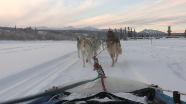 pov sequence from a sled being pulled speedily along by husky dogs. - rimorchiare video stock e b–roll