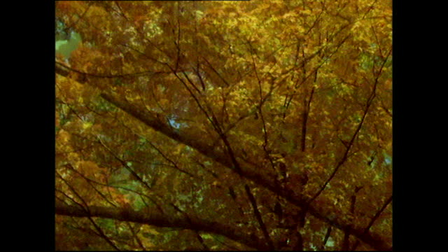 stockvideo's en b-roll-footage met sequence of autumn leaves and colours in vermont - vermont
