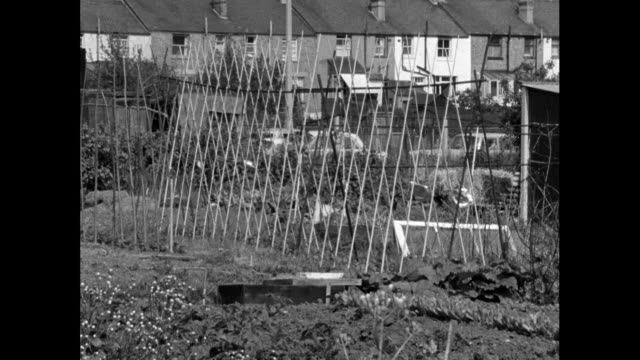 sequence of gvs of suburban london allotment gardens; 1965 - 1965 stock videos & royalty-free footage