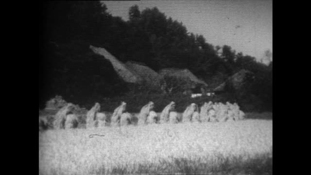 sequence of rice harvest in japan paddy fields; 1958 - 1958 stock videos & royalty-free footage