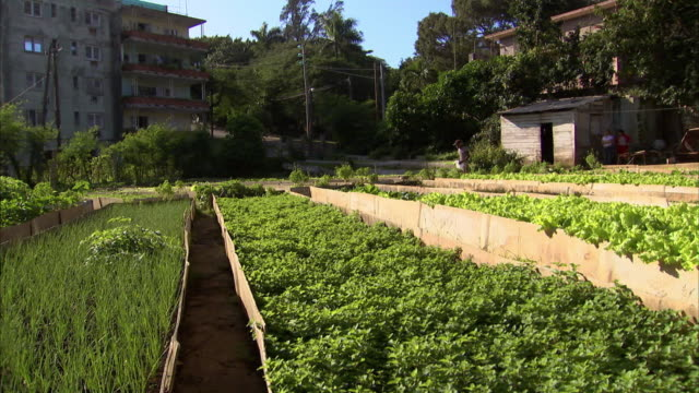 vídeos y material grabado en eventos de stock de sequence of wide shots showing the raised beds of an orgniponico market allotment in cuba. - huerto urbano