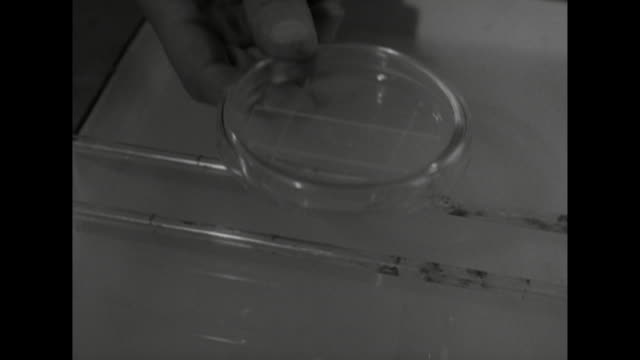 sequence showing a glass slide being stained in a laboratory - microscope slide stock videos & royalty-free footage