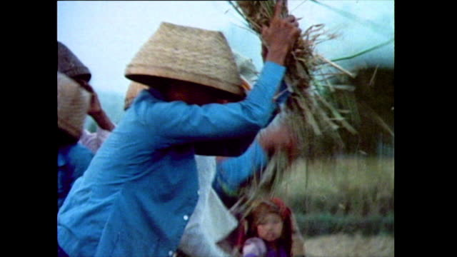 sequence showing a group of women harvesting and threshing rice by hand in a paddy field in bali two young girls sieve grains 1985 - threshing stock videos & royalty-free footage