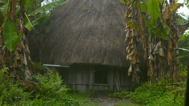 vidéos et rushes de sequence showing a honai hut in papua by day and night. - bananier