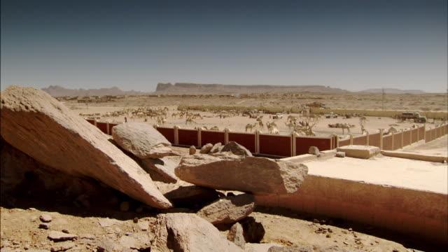 Sequence showing a huge camel market at Tamanrasset, Algeria.