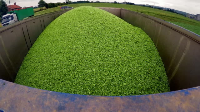 sequence showing a pea harvest, uk - heap stock videos & royalty-free footage