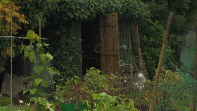 sequence showing an overgrown shed and birdhouse on an urban allotment, uk. - 野菜畑点の映像素材/bロール
