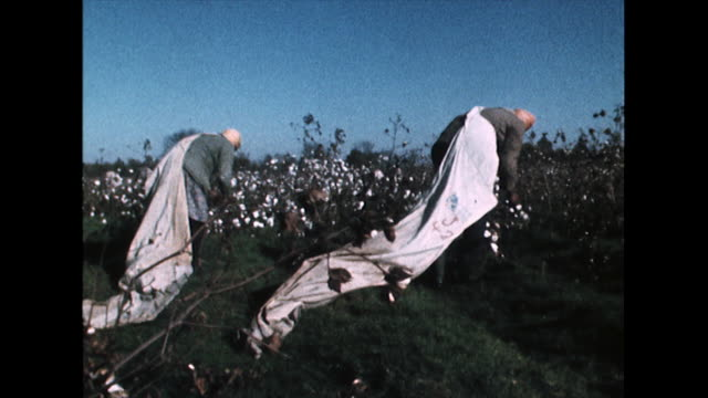 sequence showing black farm workers picking cotton in fields on a self-owned, cooperative farm in mississippi; 1968. - multiple image stock videos & royalty-free footage