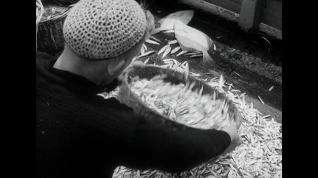 vídeos de stock e filmes b-roll de sequence showing fishermen sieving their freshly caught catch of whitebait - rede de pesca comercial