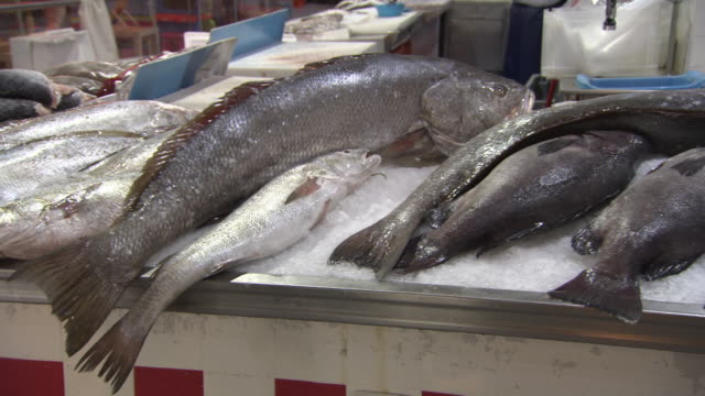 sequence showing fresh fish at a lisbon market, portugal. - auslage stock-videos und b-roll-filmmaterial