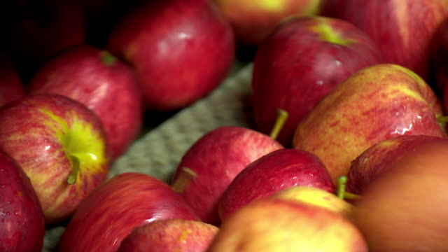 sequence showing gala apples in a processing plant tumbling into a machine, kent, uk. - apple fruit stock videos and b-roll footage
