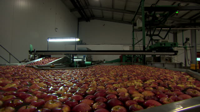 Sequence showing Gala apples moving through a water bath and up a conveyor belt at a processing plant in Kent, UK.