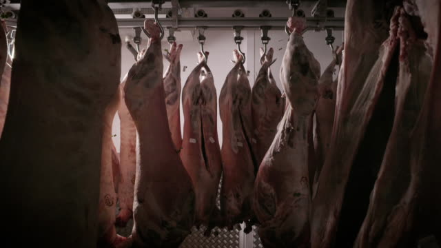 sequence showing hanging pork carcasses. - refrigerator stock videos & royalty-free footage