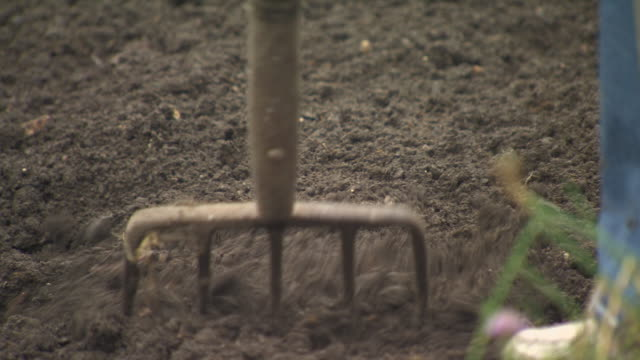 sequence showing soil management on an urban allotment with the use of a large garden fork, uk. - garden fork stock videos & royalty-free footage
