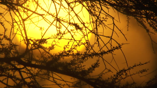 sequence showing the sun rising behind the silhouetted branches of a tree, tanzania. - komplett stock-videos und b-roll-filmmaterial