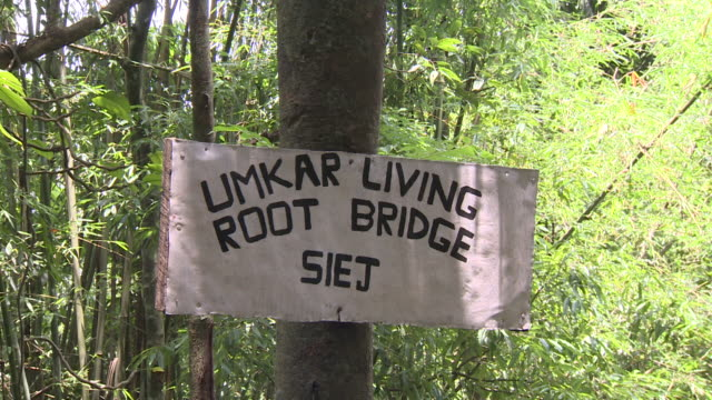 sequence showing umkar living root bridge, constructed from the aerial roots of rubber trees, siej, meghalaya, india. - root stock videos and b-roll footage