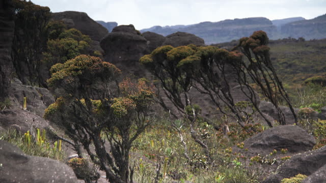 Sequence showing unusual flora growing around ancient, exposed cave formations on the surface of a Tepui mountain, Venezuela.