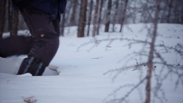 vidéos et rushes de sequence showing very deep snow in siberia, russia. - arbre sans feuillage