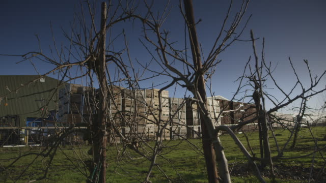 Sequence showing views of a large apple processing plant as seen through the bare branches of its accompanying orchard, Kent, UK.