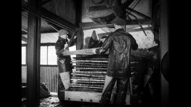 Sequence showing workers layering apple pulp between cloth and basketwork at a cider factory