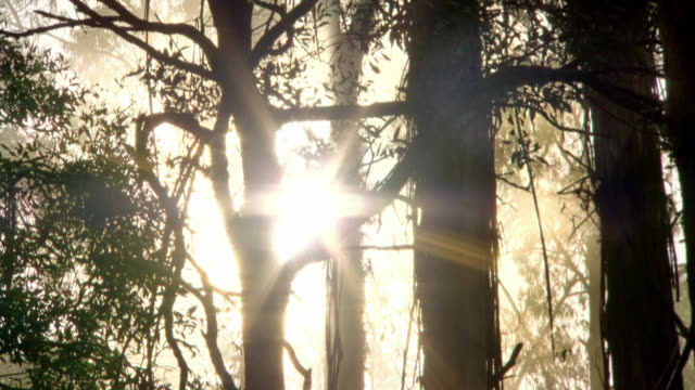 sequence trees silhouetted against sky with sun - atmosphere filter stock videos & royalty-free footage
