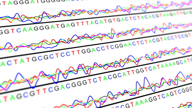 dna sequencing tacg - genetic variation stock videos & royalty-free footage