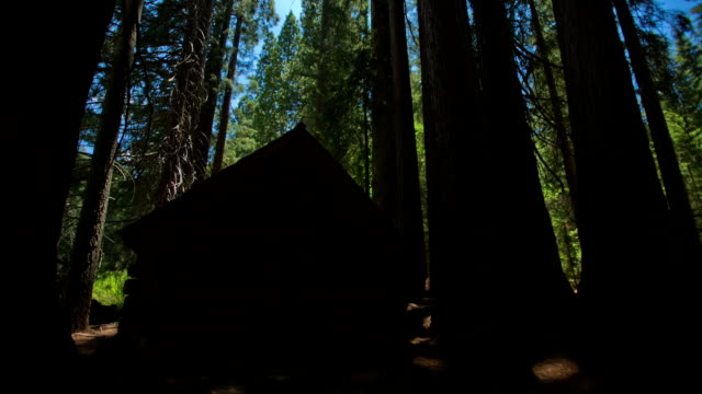 sequoia grove - giant sequoia stock videos and b-roll footage