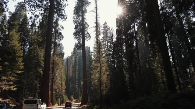 vídeos y material grabado en eventos de stock de parque nacional sequoia, california - parque nacional de secoya