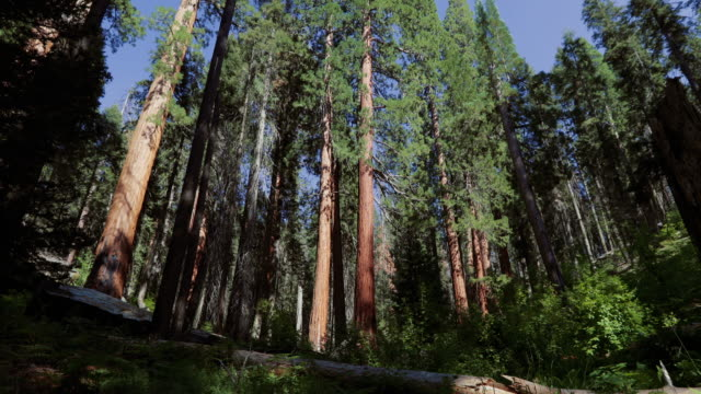 sequoia national park, california - sequoia national park stock videos & royalty-free footage