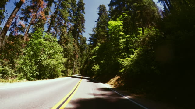 vidéos et rushes de sequoia national park, californie - parc national