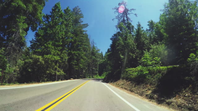sequoia nationalpark, kalifornien - riesenmammutbaum stock-videos und b-roll-filmmaterial