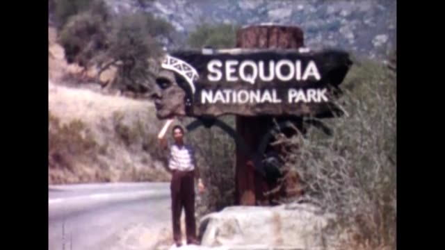 1955 sequoia national park - national park stock videos & royalty-free footage