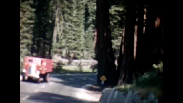 1955 sequoia national park - giant sequoia stock videos and b-roll footage