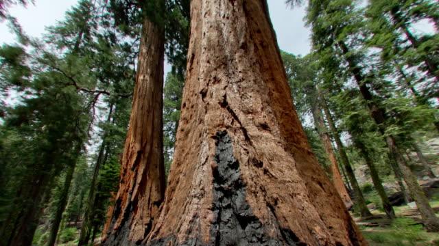 vídeos y material grabado en eventos de stock de parque nacional de secoya - parque nacional de secoya