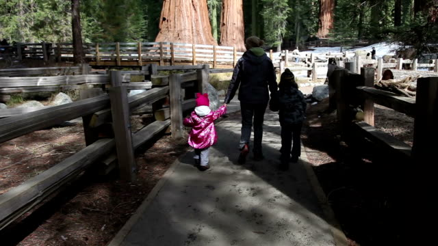 sequoia walk - giant sequoia stock videos and b-roll footage
