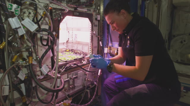 serena m. auñón-chancellor works inside the spaceship. the mission of expedition 56 began on 1 june 2018 upon the departure of soyuz 07. it ended on... - space mission stock videos & royalty-free footage