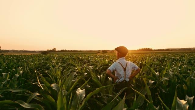 gelassene junge im sonnigen, idyllischen ländlichen maisfeld, real-time - suspenders stock-videos und b-roll-filmmaterial