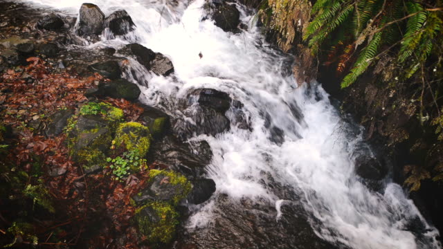 a serene creek with running water flowing over mossy rocks - fatcamera stock videos & royalty-free footage