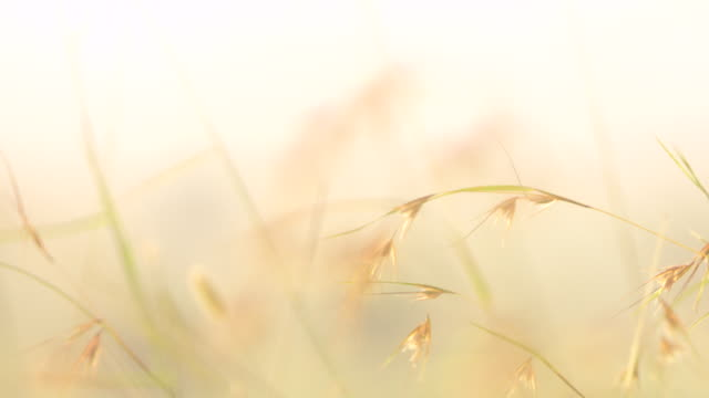 serengeti grass waves in wind. - generic location stock videos & royalty-free footage