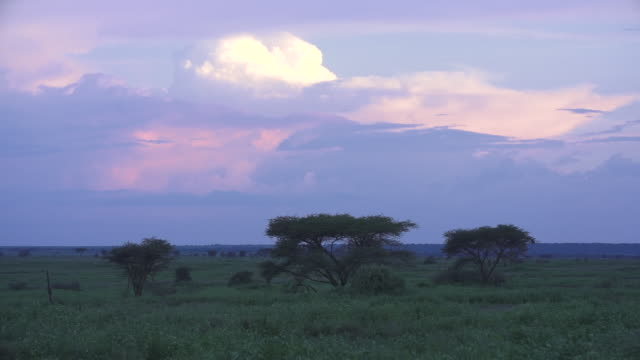 Serengeti Landscape At Dusk